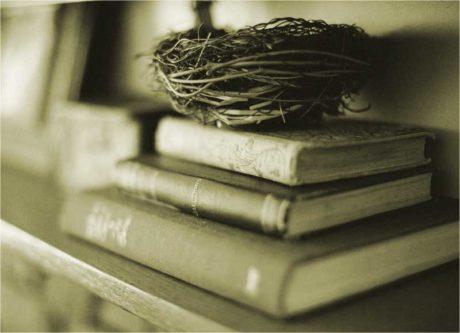Гнездо на стопке литературы